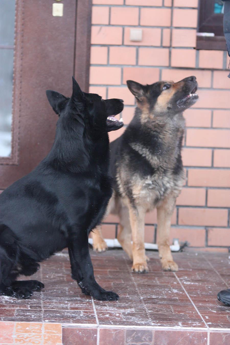 Наши собаки в гостинице для кошек и собак