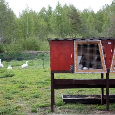 """Мини-зоопарк в гостинице для собак и кошек """"Дружба"""""""
