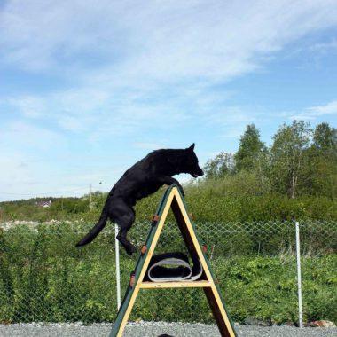 """Большая оборудованная площадка для занятий с собаками в гостинице для кошек и собак """"Дружба"""""""