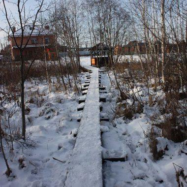 Наш зимний лес для прогулок