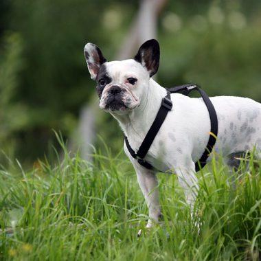 Прогулки на свежем загородном воздухе 3 раза в день