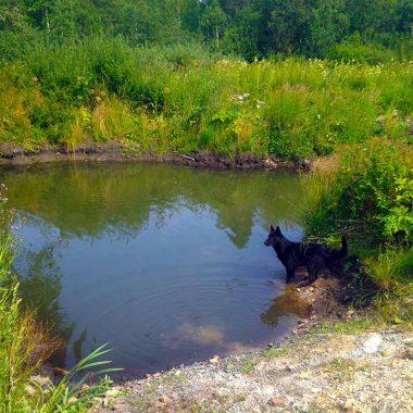 Пруд для купания собак