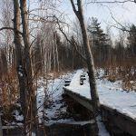 Новоалексеевское,лес,прогулки с собаками